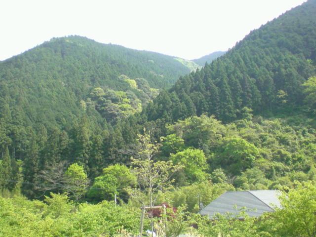 清水区やすらぎの森。