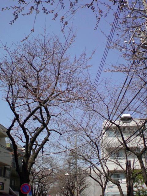 桜の花の咲く頃に。